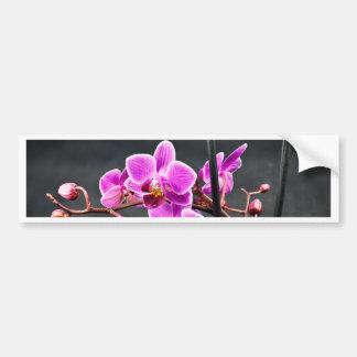 Orchid Bumper Sticker