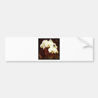 Orchid Bumper Stickers