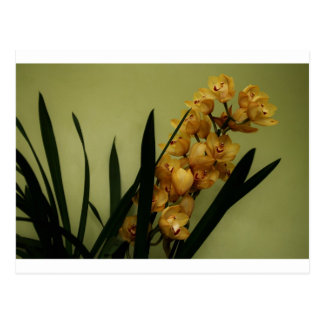 """""""orchid"""" by Coressel Productions Postcard"""