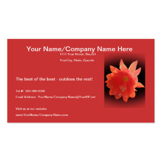 Orchid Cactus - Epiphyllum Ackermannii - Blossom Double-Sided Standard Business Cards (Pack Of 100)