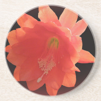 Orchid Cactus - Epiphyllum Ackermannii - Blossom Drink Coasters