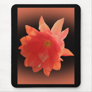 Orchid Cactus - Epiphyllum Ackermannii - Blossom Mouse Pad