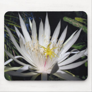 Orchid Cactus Mouse Pad