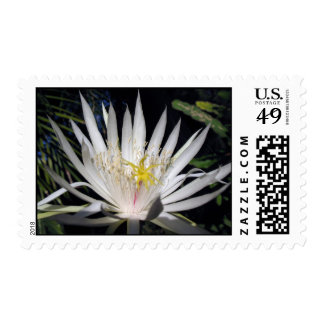 Orchid cactus stamp