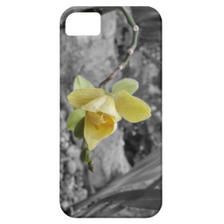 orchid case iPhone 5 covers
