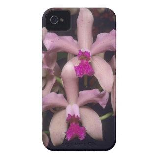 Orchid, (Cattleya amethystoglossa), Eastern iPhone 4 Cover