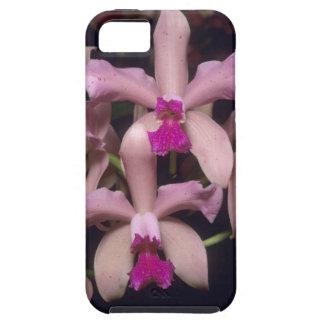 Orchid, (Cattleya amethystoglossa), Eastern iPhone SE/5/5s Case