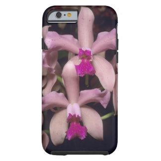 Orchid, (Cattleya amethystoglossa), Eastern Tough iPhone 6 Case