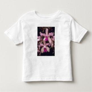 Orchid, (Cattleya amethystoglossa), Eastern Tshirts