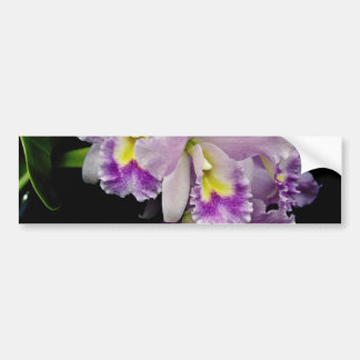 Orchid cattleya ariel x labiata flowers bumper stickers
