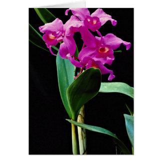 Orchid cattleya (Hailstorm Nilene)  flowers Greeting Card
