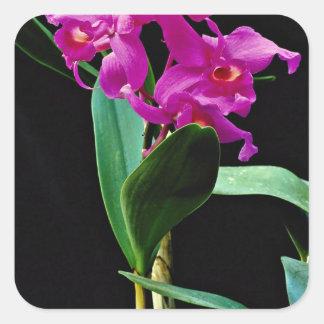 Orchid cattleya (Hailstorm Nilene)  flowers Square Sticker