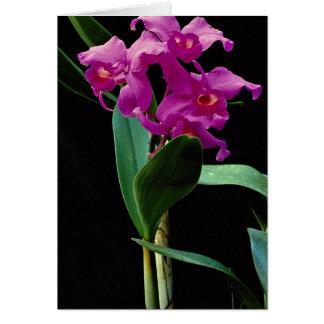Orchid cattleya (Hailstorm Nilene) Greeting Card