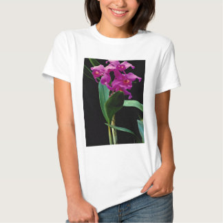 Orchid cattleya (Hailstorm Nilene) Tshirts