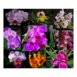 Orchid Collage Poster