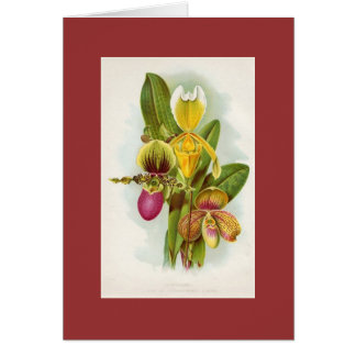 Orchid - Cypripediums Card