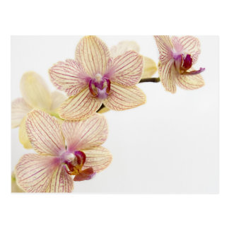 ORCHID DELIGHT POSTCARD