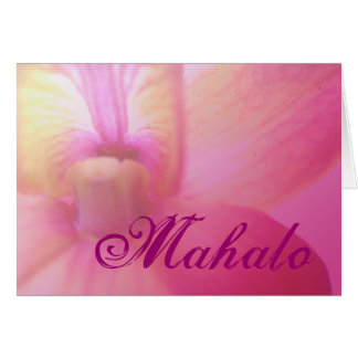 Orchid Dream Cards