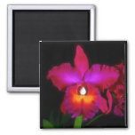 Orchid Dream Magnet