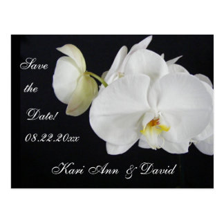Orchid Dream Post Card