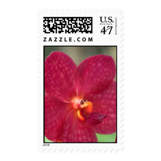 Orchid Faces Postage - matching card available!