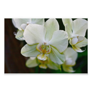Orchid Fine Art Print #9106 Photo Art