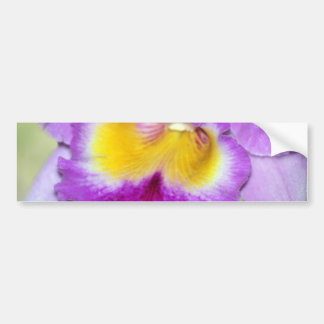 Orchid flower and meaning bumper sticker