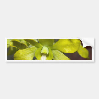 Orchid Flower Bumper Sticker
