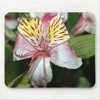 Orchid flower close up pink white yellow photo mousepads