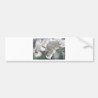 Orchid Flower Faith Love Peace Destiny Gift Car Bumper Sticker
