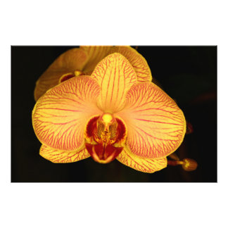 Orchid Flower Photo Print