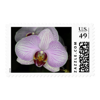 Orchid Flower Postage