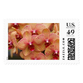 Orchid Flower Postage Stamps