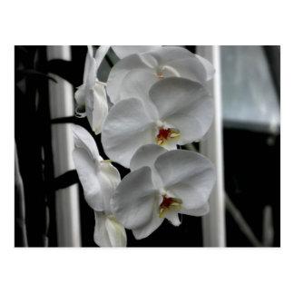 Orchid Flower Postcard