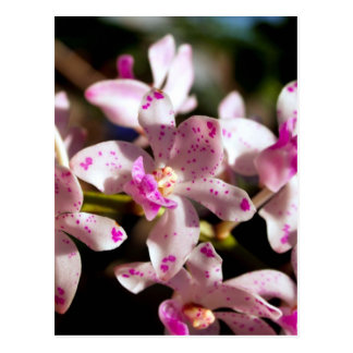 Orchid Flower Postcard