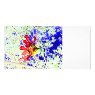orchid flower red against blue invert photo greeting card