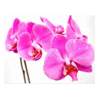 Orchid flowers closeup postcard