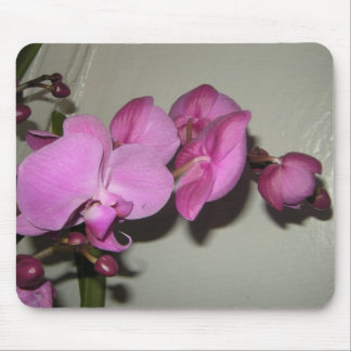 Orchid	flowers Mouse Pad