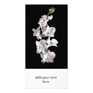 Orchid flowers on black card