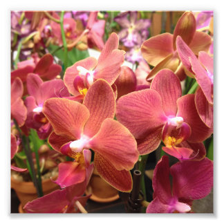 Orchid Flowers Photos Photo Print