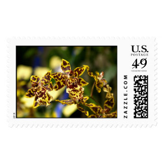 Orchid flowers postage