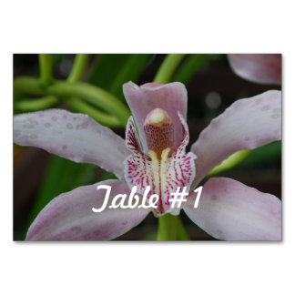 Orchid Flowers Table Cards