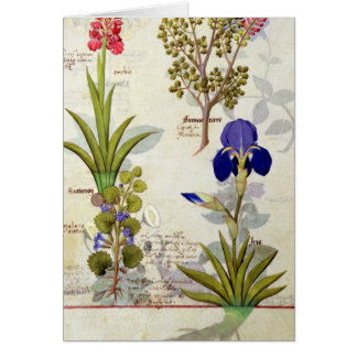 Orchid & Fumitory or Bleeding Heart Hedera & Iris Card