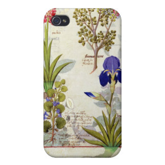 Orchid & Fumitory or Bleeding Heart Hedera & Iris iPhone 4 Covers