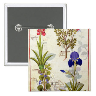 Orchid & Fumitory or Bleeding Heart Hedera & Iris Pinback Button