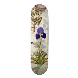 Orchid & Fumitory or Bleeding Heart Hedera & Iris Skateboard Deck