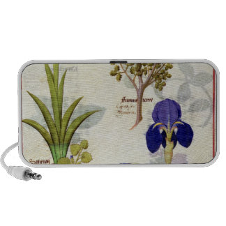 Orchid & Fumitory or Bleeding Heart Hedera & Iris iPhone Speakers