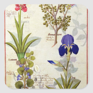 Orchid & Fumitory or Bleeding Heart Hedera & Iris Square Sticker