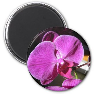 Orchid Giftware magnet