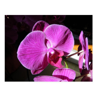 Orchid Giftware Postcard